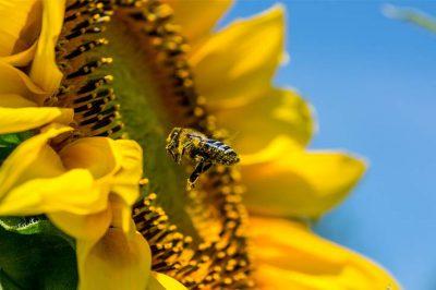 Rettet die Bienen